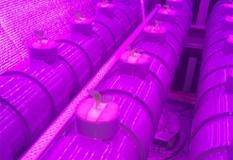 有機水耕栽培