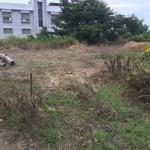 SPI太陽光第2号発電所(草刈り)
